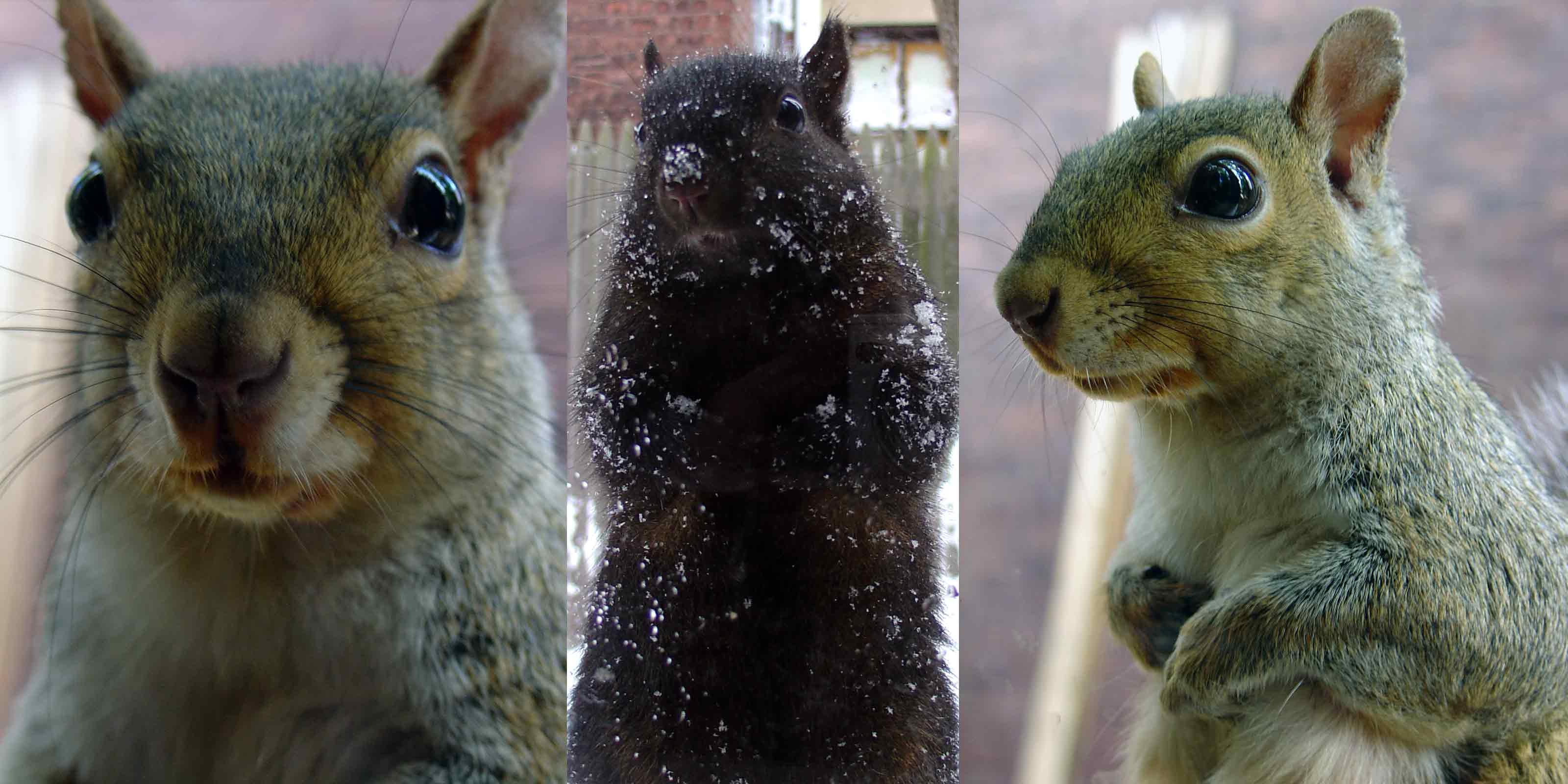 Zayko Squirrels